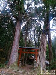 九頭神社(鳥居と杉の巨木)