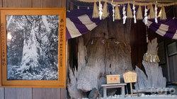 神明神社(長寿の楠)