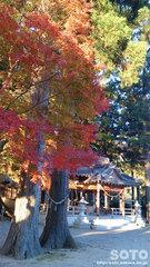 水屋神社(紅葉)