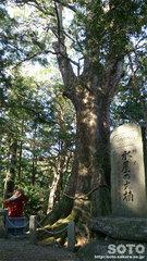 水屋神社(ご神木)