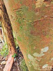 岩屋神社(木の幹に落書き)