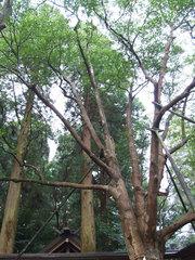 天岩戸神社(5)