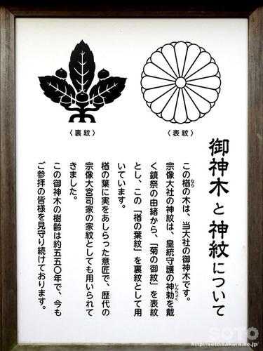 宗像大社(ご神木と神紋についての案内板)