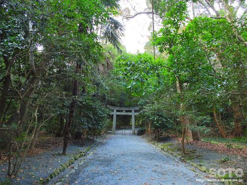 宗像大社(悠久の道)