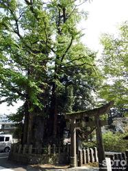 小国両神社(3)