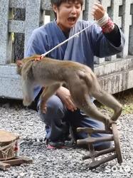 上川神社 秋の講社大祭(27)