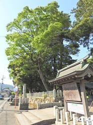 若狭姫神社(1)