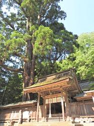 若狭姫神社(4)