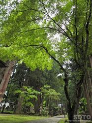 雄山神社 中宮祈願殿(8)