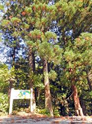 浮島神社(入り口)