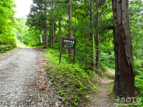 大山祇神社(木の根坂)
