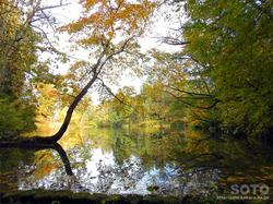 大沼の浮島(沼と紅葉)