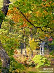 大沼の浮島(浮島神社と紅葉)