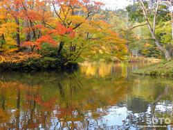 大沼の浮島(大沼と紅葉)