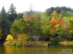 大沼の浮島(紅葉と浮島神社)