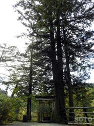 大沼の浮島(第十三番札所)