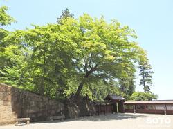 妙義神社(23)