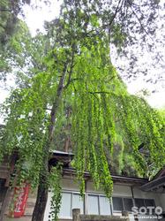 早池峰神社(12)
