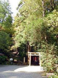 宝登山神社(11)