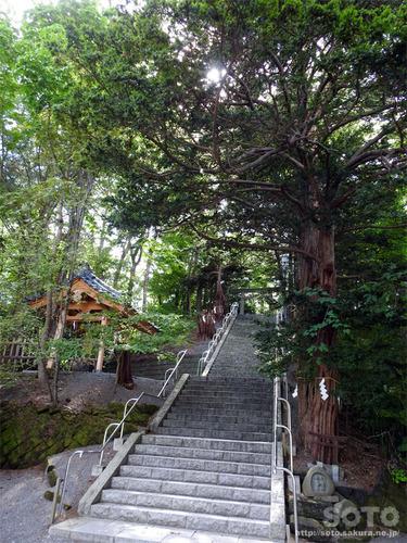 千歳神社(参道)