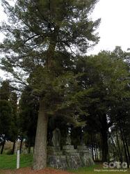 志々岐神社(15)