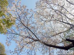 宇土 住吉神社(12)