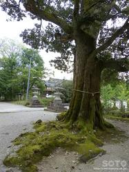 中嶋神社(8)