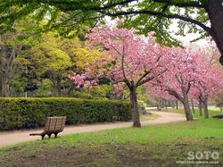 猿賀公園(1)