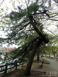 猿賀公園(4)