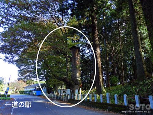 親都神社(大欅)
