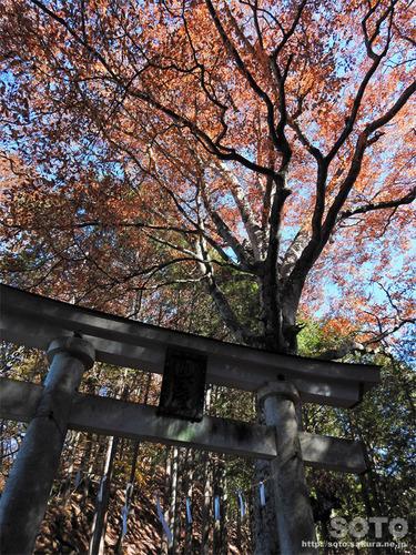 三峯神社(15)