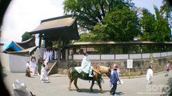 阿蘇神社おんだ祭(5)