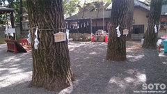 田無神社(五龍ご神木)