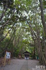 宗像大社(高宮への悠久の道)