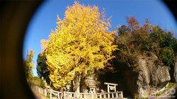 大谷石採石場跡(神社)