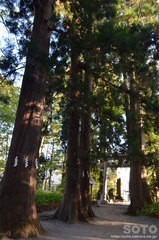 十和田神社(参道)