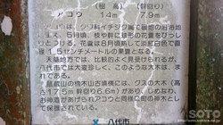 八代市水島(アコウ看板)