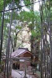 神龍八大龍王神社(1)