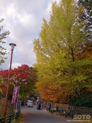 三峯神社(紅葉)