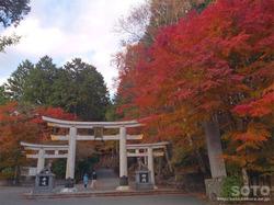 三峯神社(鳥居と紅葉)
