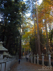 三峯神社(参道)