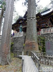 三峯神社(ご神木)