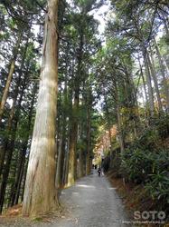三峯神社(杉林の道)