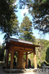 國造神社(手野の大杉)