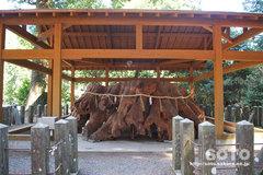 國造神社(大杉2)