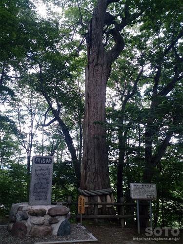 平取(義経神社の栗)