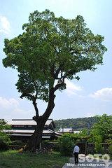 富来神社(10)