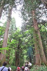 戸隠奥社参道杉並木(1)