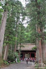 戸隠奥社参道杉並木(2)