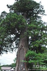 戸隠中社(三本杉2)